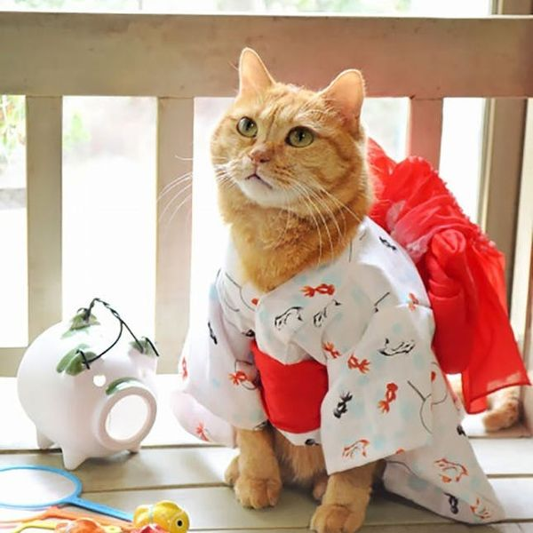 The BritList: Cats Wearing Kimonos, Leggy Tables and More
