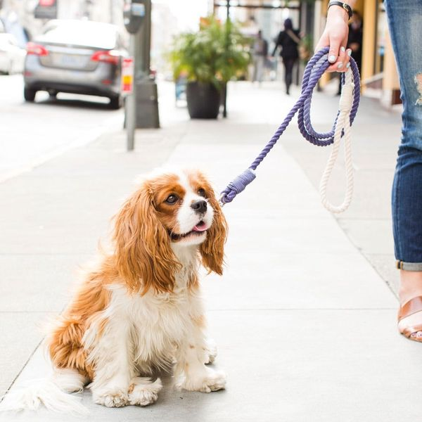 DIY This Ombre Rope Leash for Your Stylish Pup