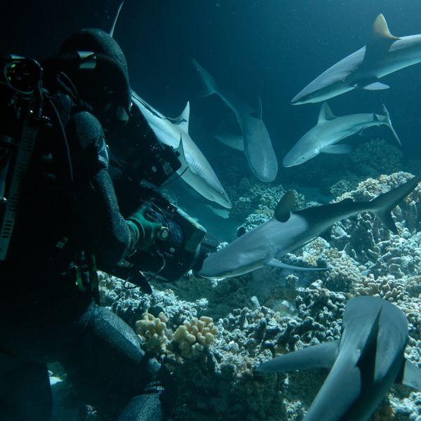 8 Eye-Opening Environmental Documentaries to Stream on Netflix