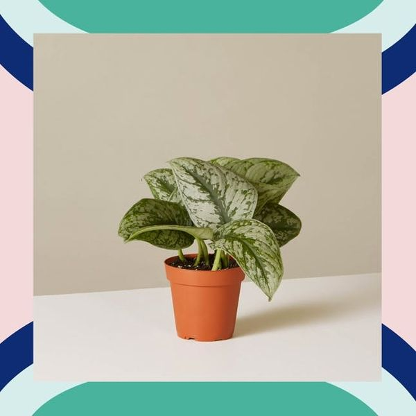 how to keep indoor plants alive