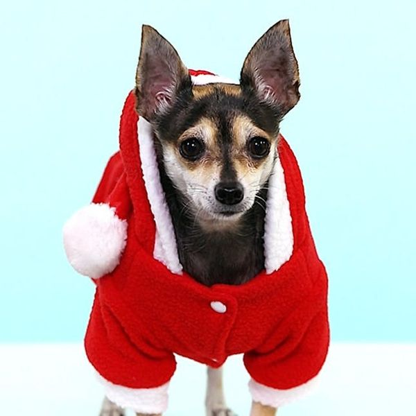 The Most Adorable Photos of Dogs in Christmas Costumes