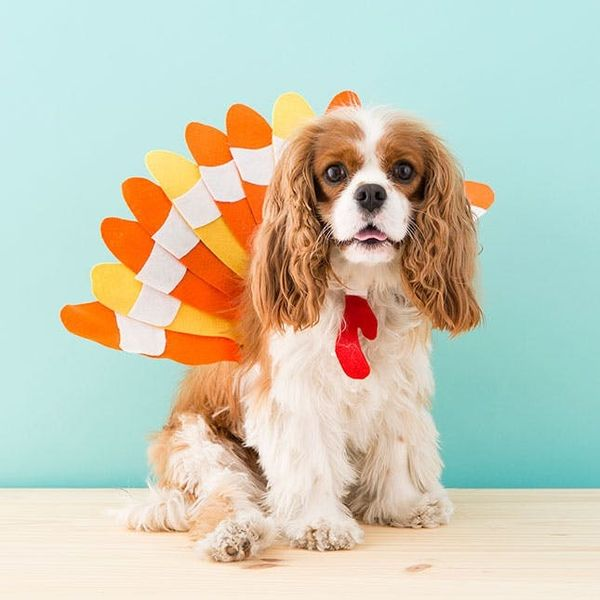 How to Dress Your Dog as a Turkey This Halloween
