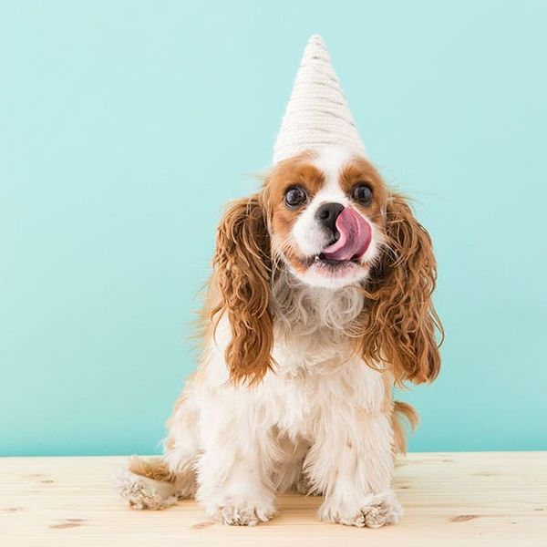 How to Make a Unicorn Costume for Your Dog This Halloween