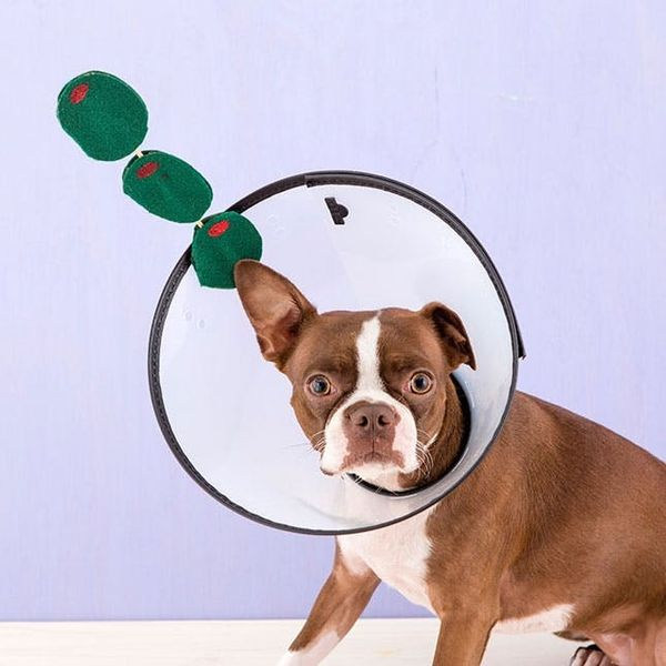 This Dog Martini Is the Funniest Pet Costume Ever