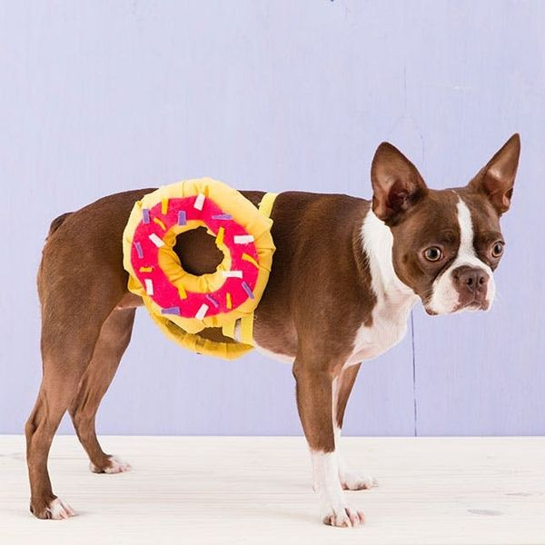 How to Dress Your Pet Up like a Donut for Halloween