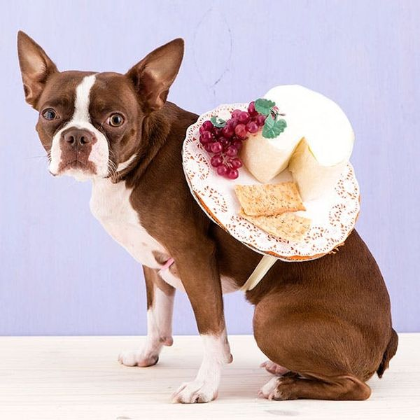 How to Dress Your Dog Up as a Cheese Plate for Halloween