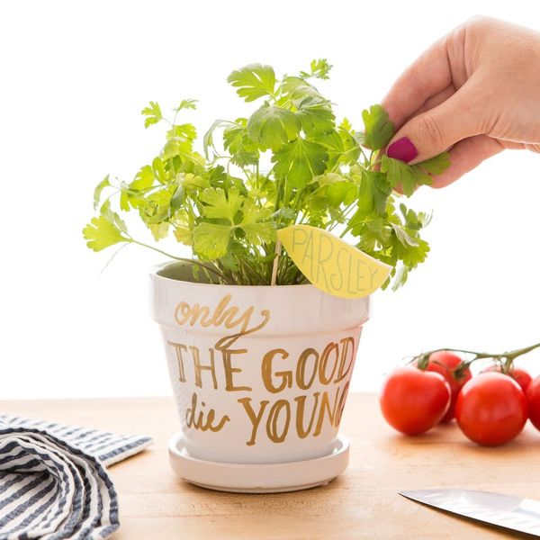 Freshen Up Your Home Cooking With This DIY Potted Parsley