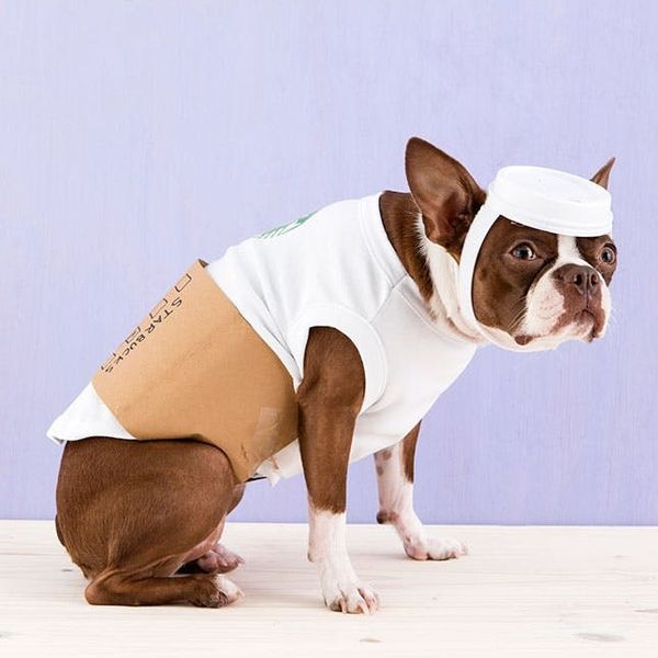 How to Dress Your Dog like a Latte for Halloween