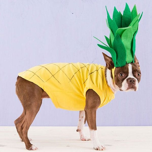 How to Dress Up Your Dog in a DIY Pineapple Costume