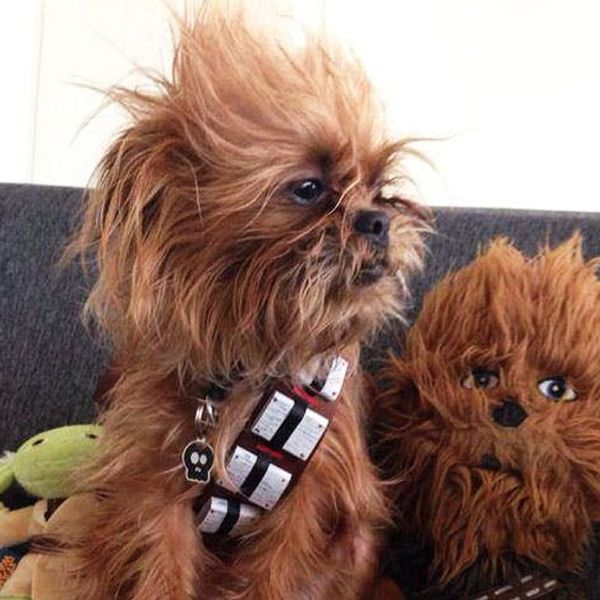 The BritList: Chewbacca Dog, The Confetti Bar and More