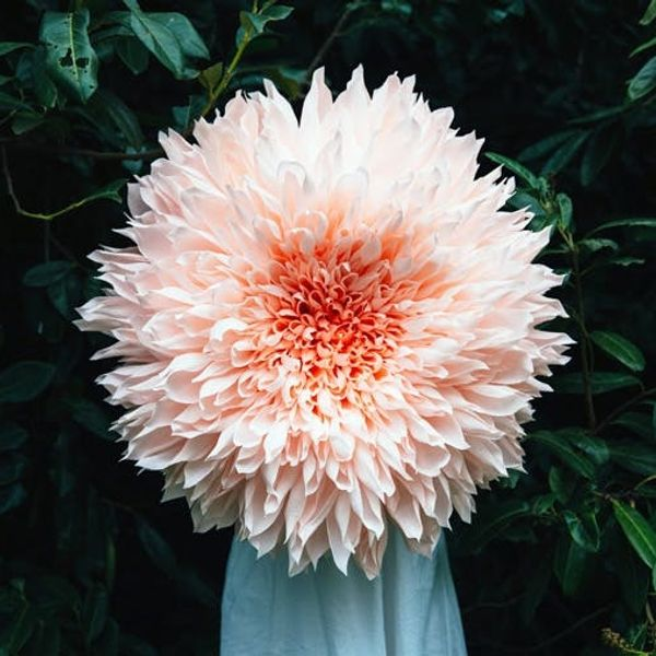 Made Us Look: The Biggest Paper Flowers We've Ever Seen