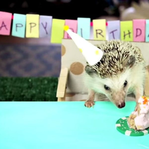 The BritList: Tiny Birthday for a Tiny Hedgehog, Truffle Beer and More