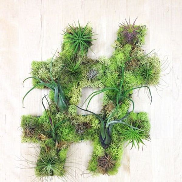 Made Us Look: The Hashtag Garden