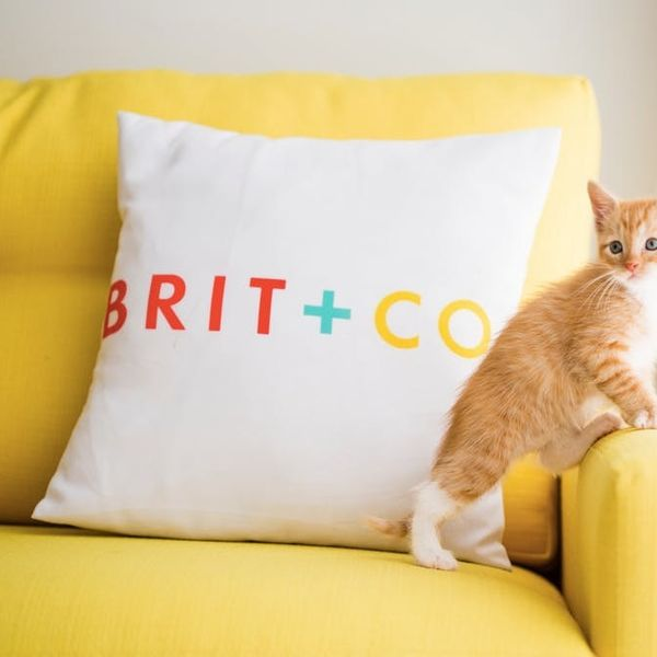 The BritList: Rappers With Puppies, Kittens of Brit + Co. and More