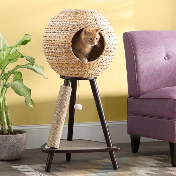 Wayfair's New Pet Furniture Line Is Paws-itively Adorable