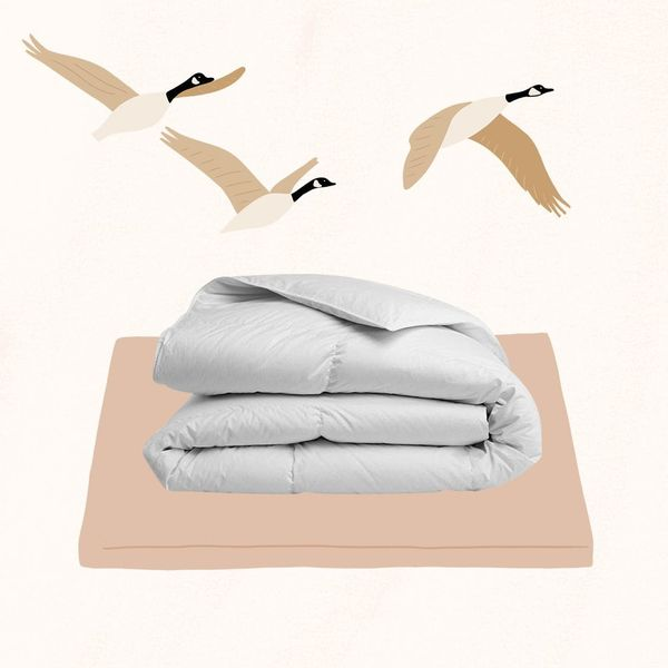 6 Best Comforters for Year-Round Snuggles
