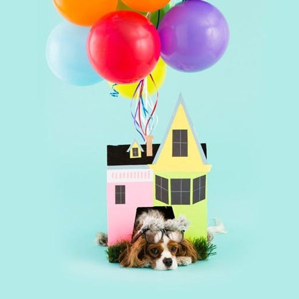 DIY the House from UP as a Halloween Costume for Your Pup!
