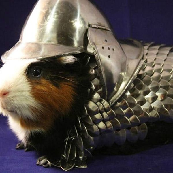 The BritList: Guinea Pig Armor, The Baguette Bag + More