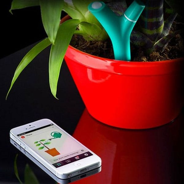 5 Activity Trackers… for Your Plants!
