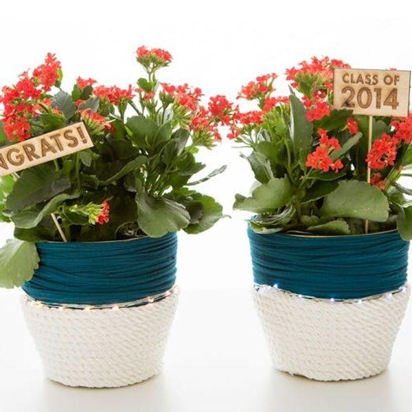 Grad Gift Idea: A DIY LED Planter in Your School Colors