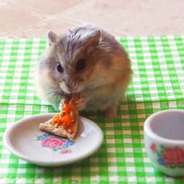 You Need to Watch This Tiny Hamster Eating a Tiny Pizza