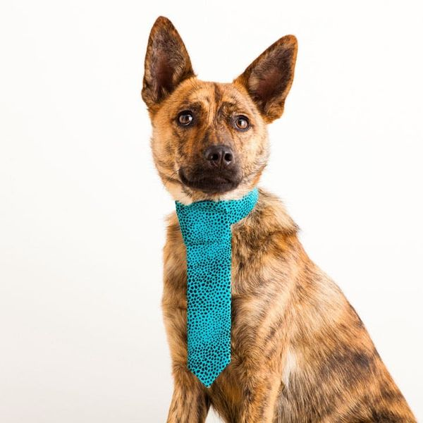 Oh You Fancy Huh? 3 Dapper Duds for Your Posh Pup