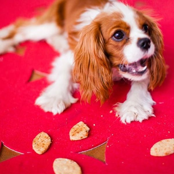 Apple Asiago Dog Treats = A Puppy Bowl Must Have!