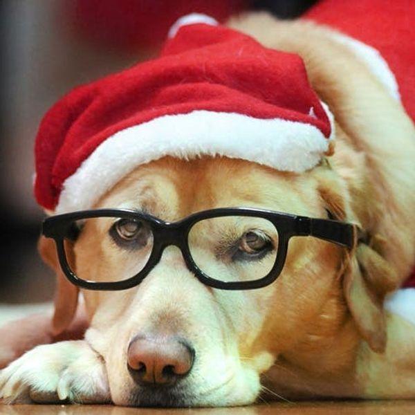 Santa Paws: 15 Ridiculously Cute Holiday Pet Photos
