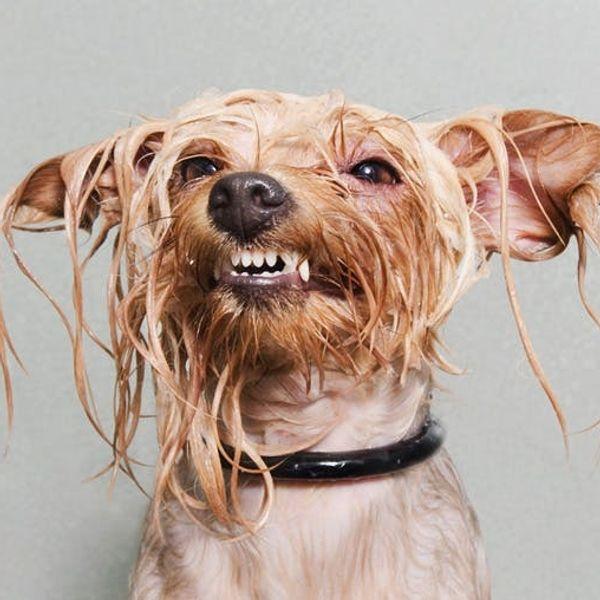 The BritList: Sriracha Vodka, Wet Dog Portraits, and More