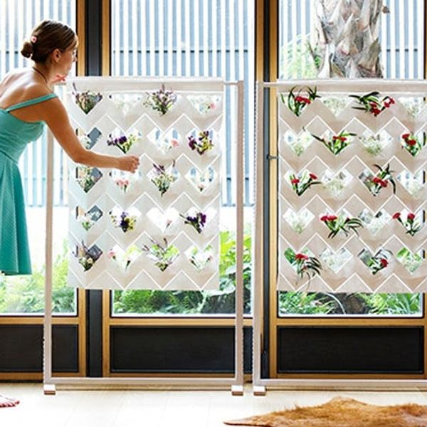A Beautiful Vertical Garden and Curtain in One