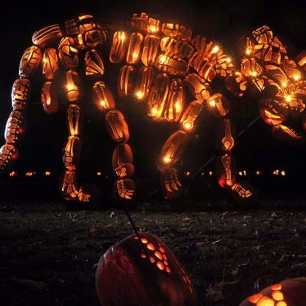 Made Us Look: Life Size Dinosaurs Made from Pumpkins!