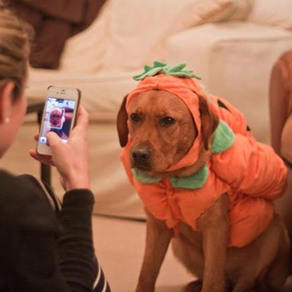 Announcing Our New Pets Category + Halloween Pet Costume Contest!