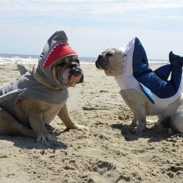 What's Your Dog Dressing Up As This Halloween? (Costume Contest!)