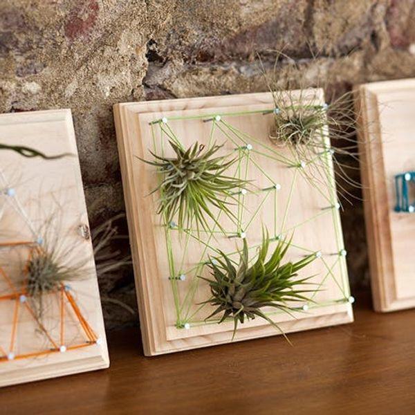 Air Plants + String Art = Living Wall Art!