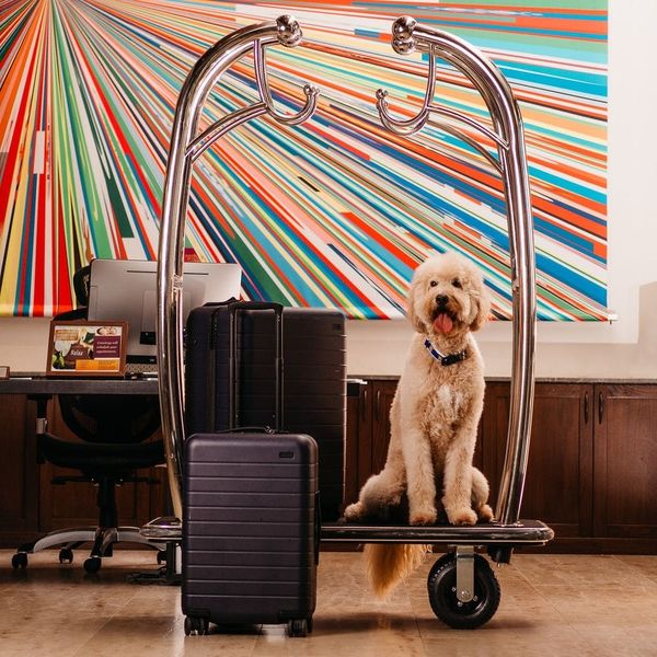 The 9 Most Pet-Friendly Hotels in the US
