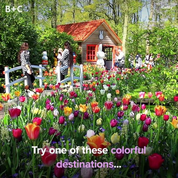 The Best Destinations to See Spring Tulips