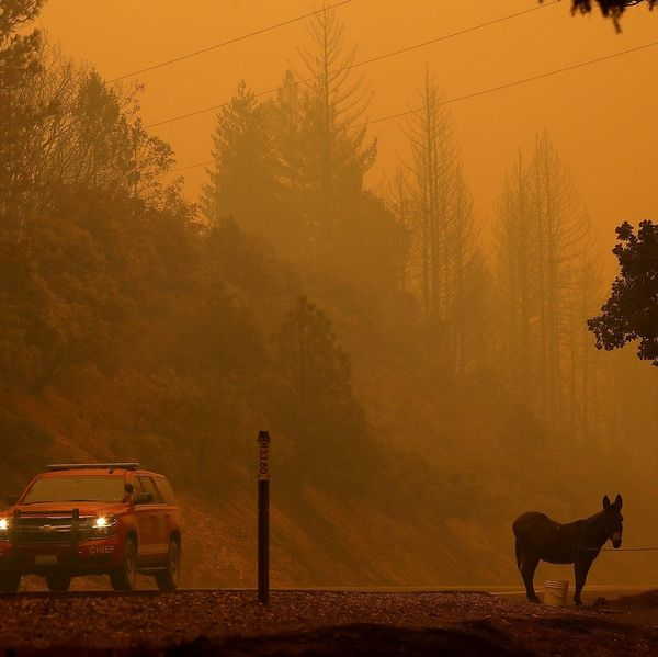 People Are Doing Everything They Can to Evacuate Animals from Devastating California Wildfires