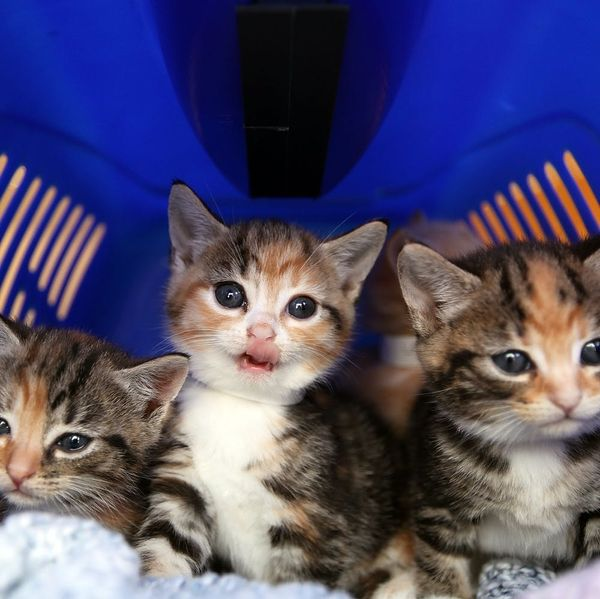 The USDA Is Finally Ending All Testing on Cats and Kittens