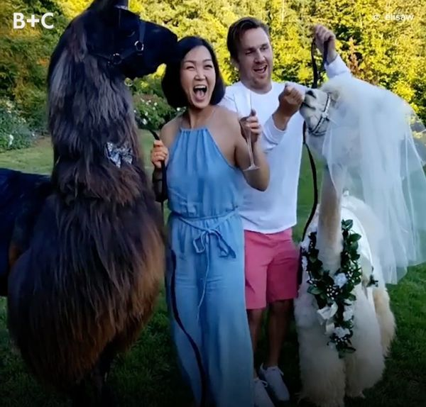 Why People Invite Llamas and Alpacas to Their Wedding