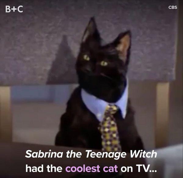 Proof That Salem Is the Coolest TV Cat EVER