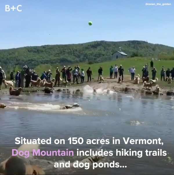 Here's Why You Should Take Your Dog to Dog Mountain