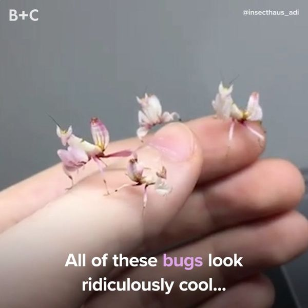 Proof That Bugs Can Be Ridiculously Cool