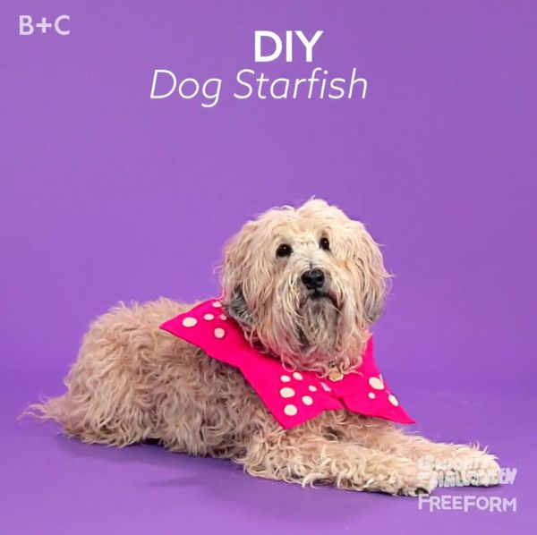 How to make a Dog Starfish Costume