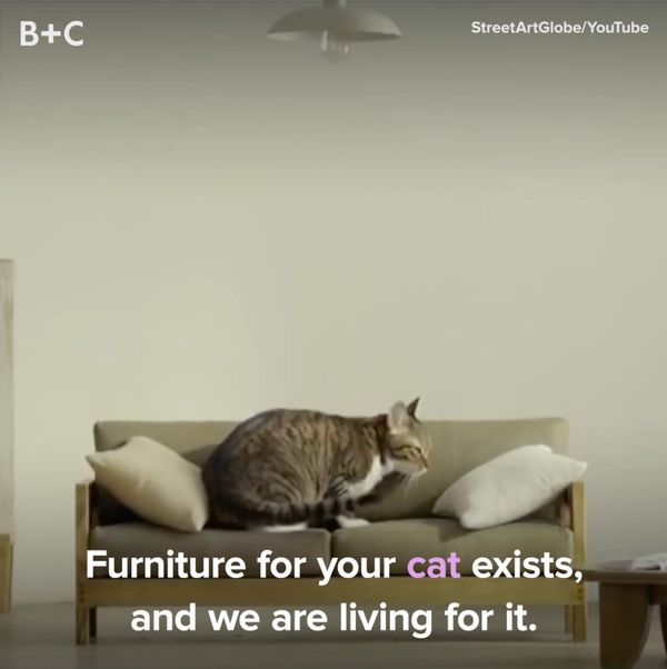Furniture For Your Cats Is *Officially* a Thing