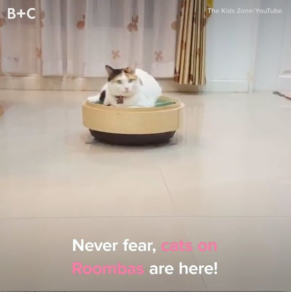 Cats On Roombas Will Make You LOL