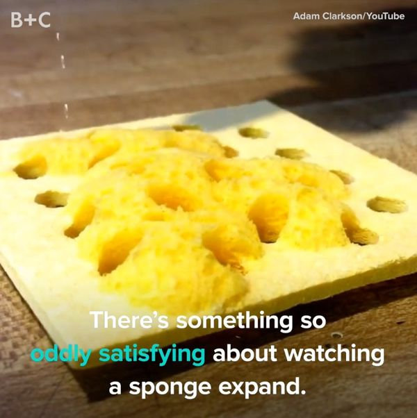 There's Something SO Satisfying About Adding Water to a Sponge