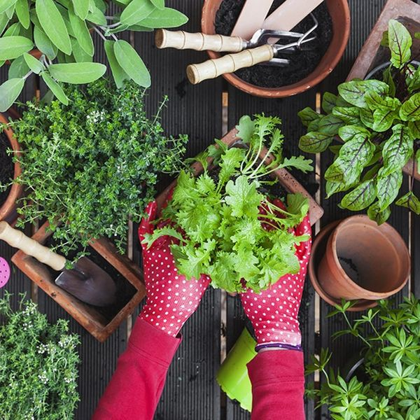Why Starting a Garden Could Be the Key to Boosting Your Spring Mood