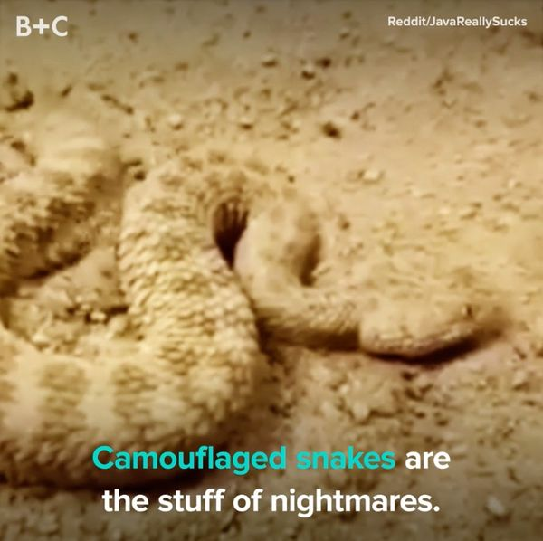 Camouflaged Snakes Are Freaky AF