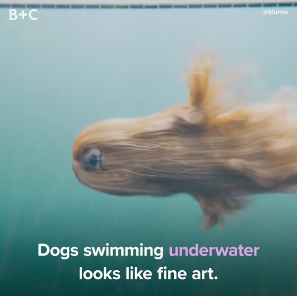 Dogs Swimming Underwater Is So Weird