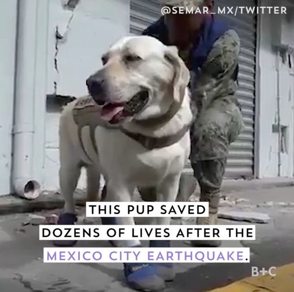 This Pup Saved Dozens of Lives After the Mexico City Earthquake